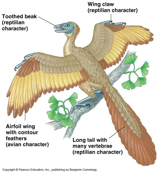 Comparative anatomy of vertebrates circulatory system